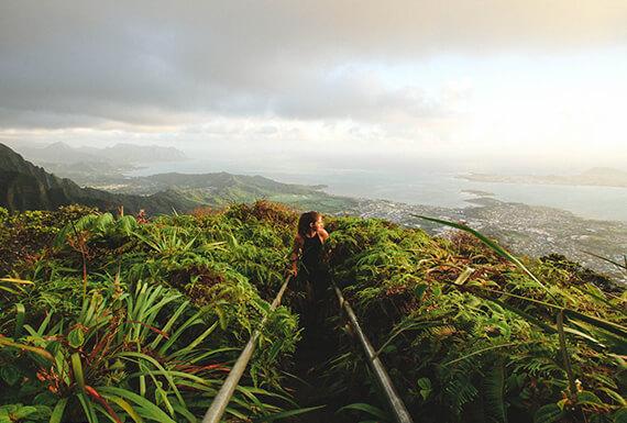 Jungle lightroom landscape presets cover