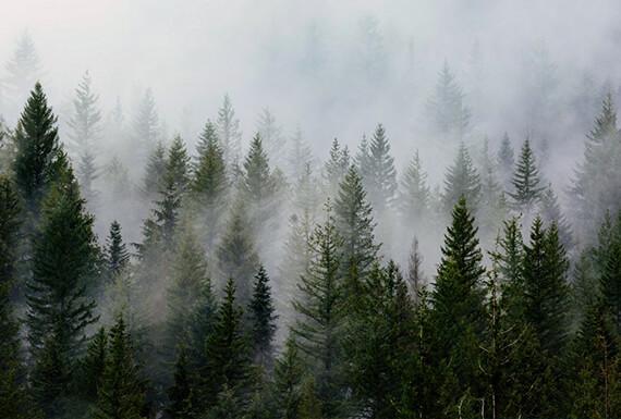 Forests & Sands lightroom landscape presets cover